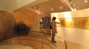 Das Museum zeichnet die Geschichte der europäischen Bisons nach.