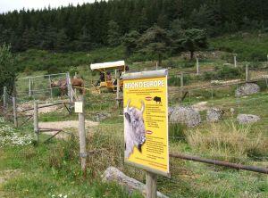 Zahlreiche Tafeln bieten Informationen über das Leben der großen Landsäugetiere.