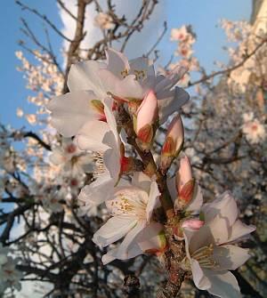 Frühe Blüte statt Eis und Schnee: Auch im Winter zeigt sich Südspanien von seiner sonnigen Seite.