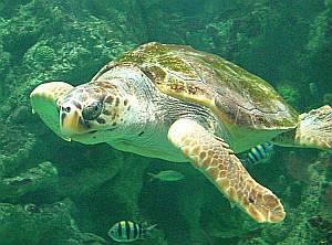 Der Park Océanopolis gibt vielfältige Einblicke in die Welt der Meere.
