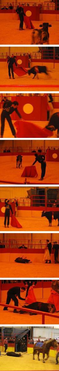 Ende eines Jungstiers: Bei der Novillada üben Nachwuchstoreros den klassischen Stierkampf.