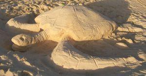 Den lebenden Vorbildern nachempfunden: eine Meeresschildkröte aus Sand.