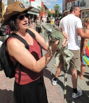 Faszinierende Echsen: Die Leguane sind auch in den Straßen der Hauptstadt ein alltäglicher Anblick.